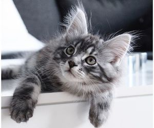 animal, kitty, and pet image