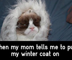 cat, cold, and haha image