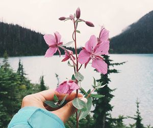 flowers, adventure, and girl image