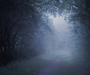 blue, dark, and forest image
