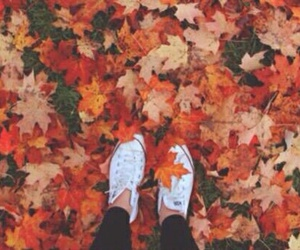 converse, fall, and autumn image