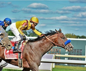 equestrian, winner, and horseracing image