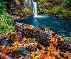 autumn, forest, and travel image