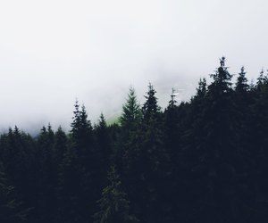 forest, nature, and winter image
