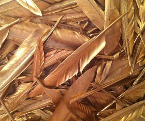 gold, feather, and aesthetic image