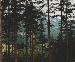nature, forest, and alternative image