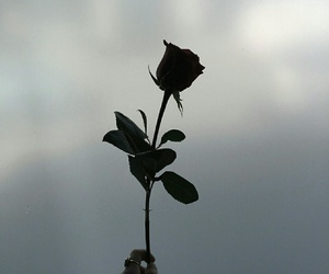 rose, flowers, and black image