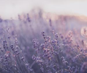 landscape, purple, and pastel image