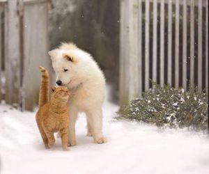 cat, dog, and snow image