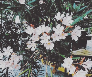 flowers, nature, and green image