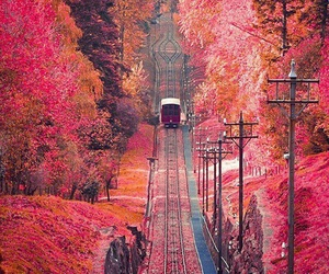 pink, train, and autumn image