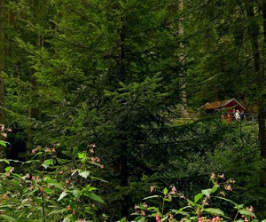 adventure, autumn, and black forest image