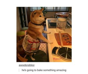 dogs, food, and funny image