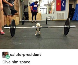 dogs, funny, and gym image