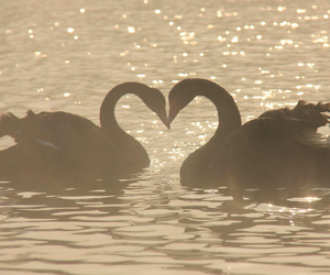 animals, light, and swans image