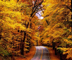 fall, nature, and road image
