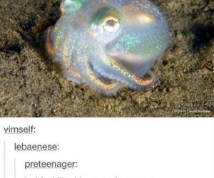 funny, octopus, and tumblr image
