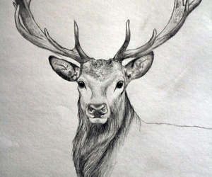 animal, draw, and black and white image