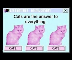 cats, grunge, and tumblr image