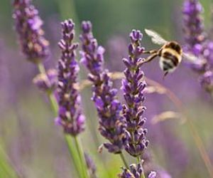 bee, field, and flowers image