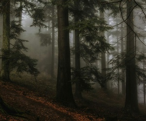 forest, dark, and trees image