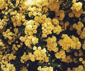 flowers, yellow, and hufflepuff image