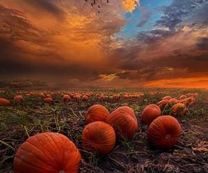 fall, pumpkin, and autumn image