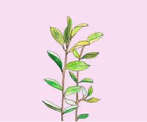 plants, pink, and green image