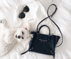 dog, bag, and puppy image