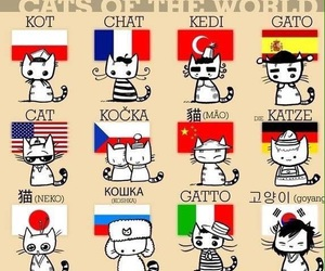 american, cat, and french image