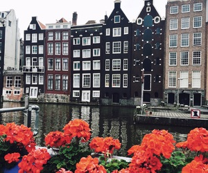 amsterdam, europe, and flowers image
