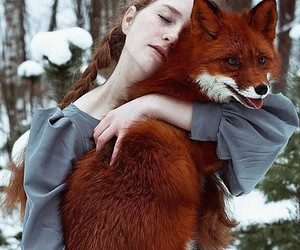 fox, animal, and red image