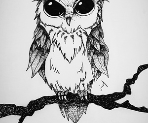 owl and sketch image