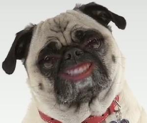 snapchat, dog, and funny image