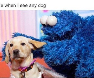 dog, funny, and true image