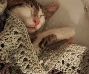 cat, crochet, and knitting image