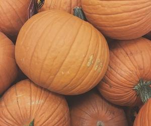 fall and orange image