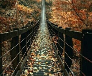 autumn, nature, and bridge image