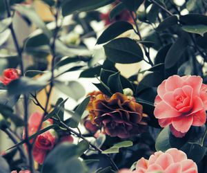 beauty, floral, and my image