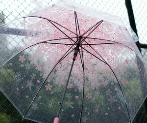 umbrella, rain, and pink image