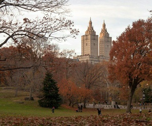 autumn, park, and nyc image
