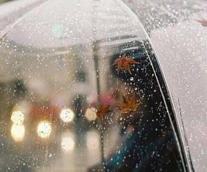 rain, autumn, and umbrella image