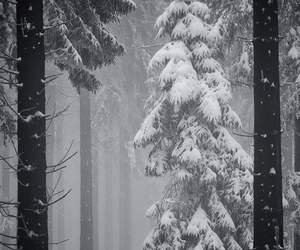 nature, snow, and tree image