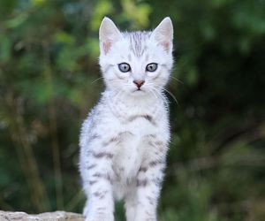 animal, cats, and cuteness image
