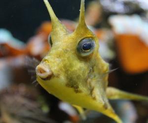 duckface fish image