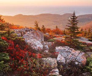 autumn, amazing, and world image