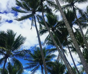 palm, clouds, and sky image