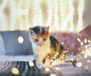 cat, light, and animal image