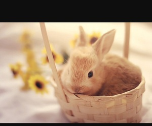 fluffy, cute, and animals image