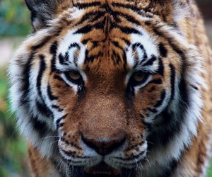 animal, autumn, and beast image